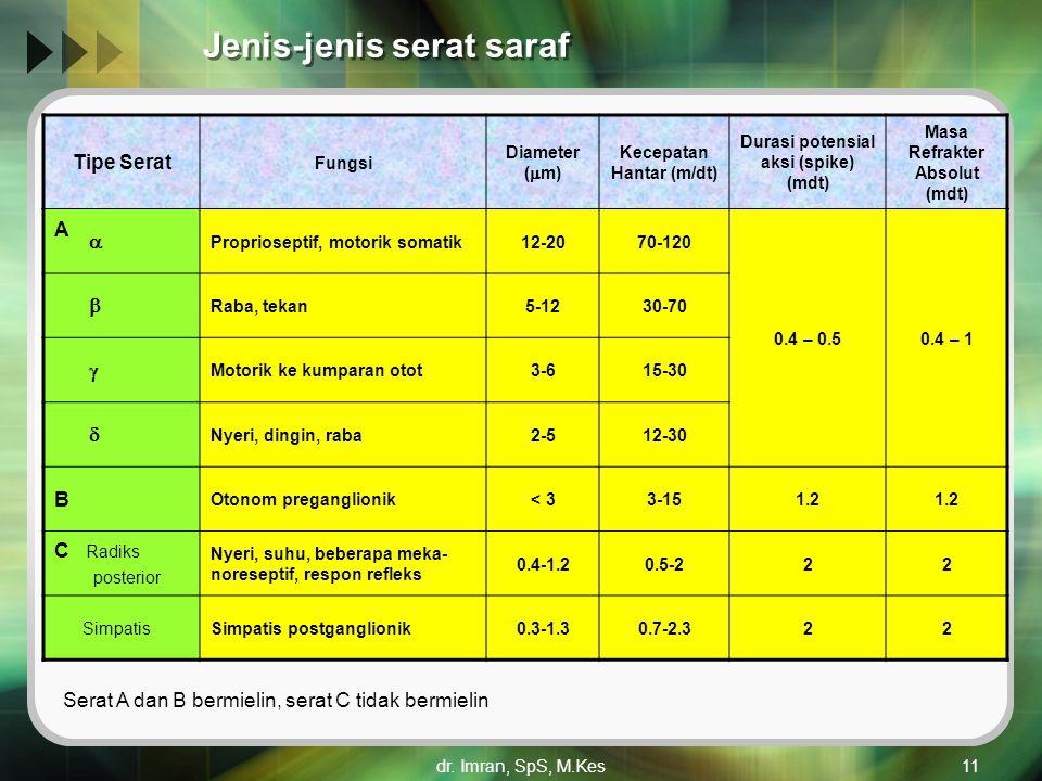 dr. Imran, SpS, M.Kes11 Jenis-jenis serat saraf Tipe Serat Fungsi Diameter (  m) Kecepatan Hantar (m/dt) Durasi potensial aksi (spike) (mdt) Masa Ref