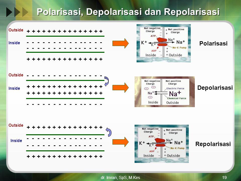 dr. Imran, SpS, M.Kes19 Polarisasi, Depolarisasi dan Repolarisasi + + + + + + + + + + + + + + + - - - - - - - - - - - - - - - + + + + + + + + + + + +