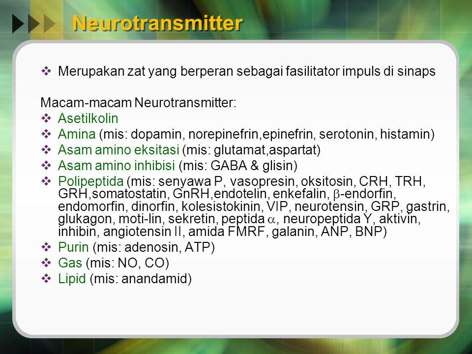 Neurotransmitter  Merupakan zat yang berperan sebagai fasilitator impuls di sinaps Macam-macam Neurotransmitter:  Asetilkolin  Amina (mis: dopamin,