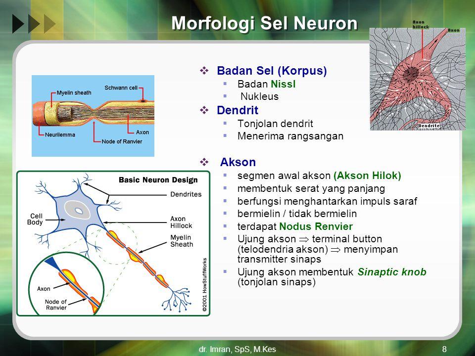 dr. Imran, SpS, M.Kes8 Morfologi Sel Neuron  Badan Sel (Korpus)  Badan Nissl  Nukleus  Dendrit  Tonjolan dendrit  Menerima rangsangan  Akson 