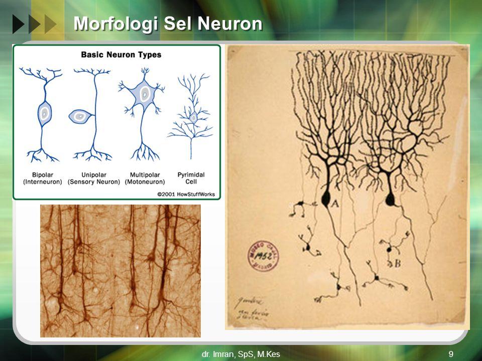 dr. Imran, SpS, M.Kes9 Morfologi Sel Neuron