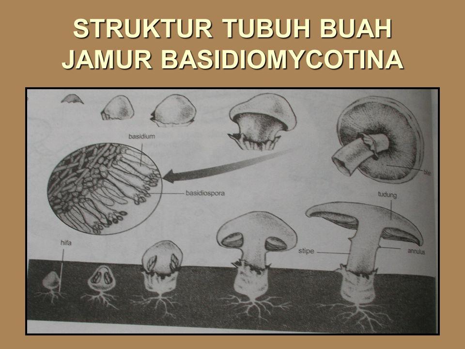 BASIDIOMYCOTINA  Tubuh buah jamur (basidiocarp) mempunyai ukuran yang besar, mudah diamati.  Jamur sejati, bentuk bermacam-macam (payung, bola, atau