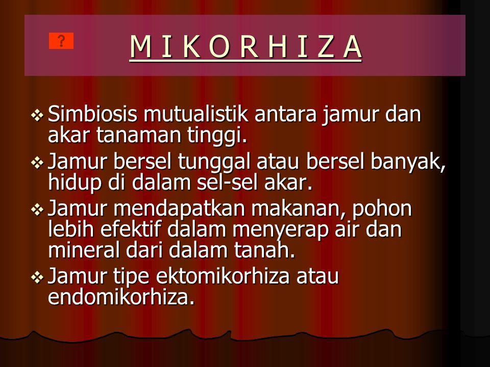 LICHENES dan MIKORIZA