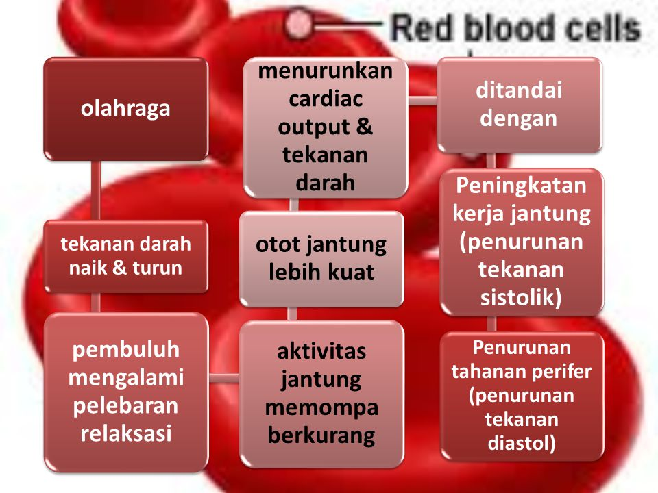 olahraga tekanan darah naik & turun pembuluh mengalami pelebaran relaksasi aktivitas jantung memompa berkurang otot jantung lebih kuat menurunkan cardiac output & tekanan darah ditandai dengan Peningkatan kerja jantung (penurunan tekanan sistolik) Penurunan tahanan perifer (penurunan tekanan diastol)
