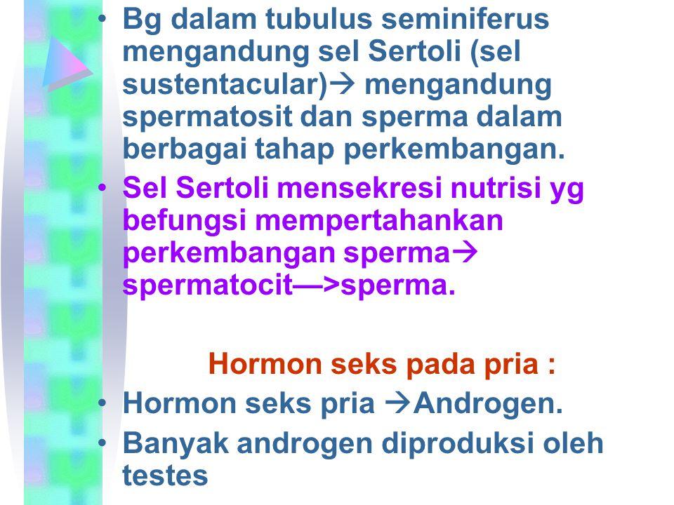 Bg dalam tubulus seminiferus mengandung sel Sertoli (sel sustentacular)  mengandung spermatosit dan sperma dalam berbagai tahap perkembangan. Sel Ser
