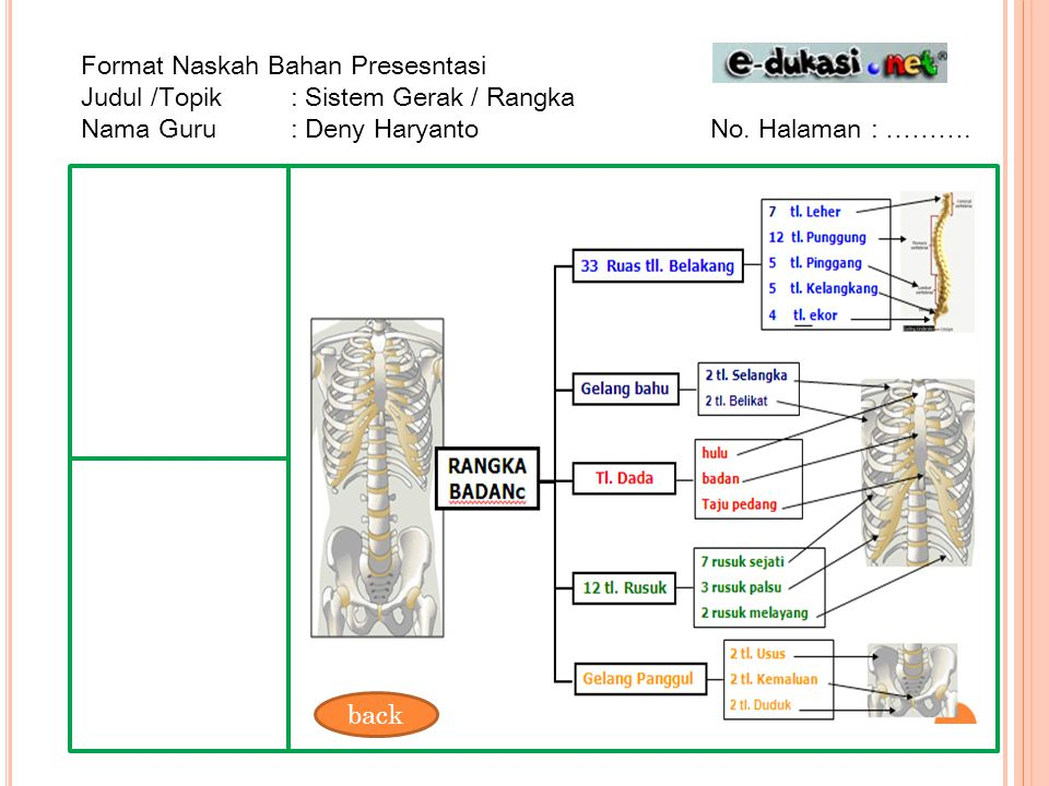 Format Naskah Bahan Presesntasi Judul /Topik : Sistem Gerak / Rangka Nama Guru : Deny HaryantoNo. Halaman : ………. back
