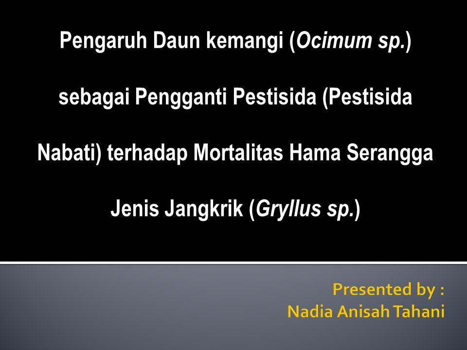 Pengaruh Daun kemangi ( Ocimum sp. ) sebagai Pengganti Pestisida (Pestisida Nabati) terhadap Mortalitas Hama Serangga Jenis Jangkrik ( Gryllus sp. )