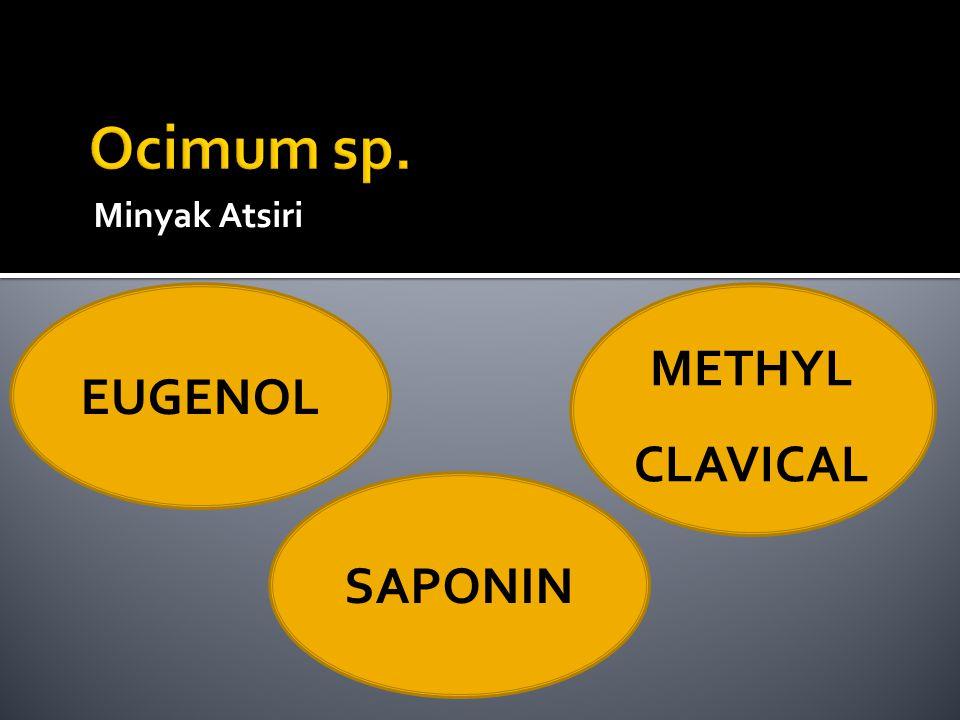 Minyak Atsiri EUGENOL METHYL CLAVICAL SAPONIN