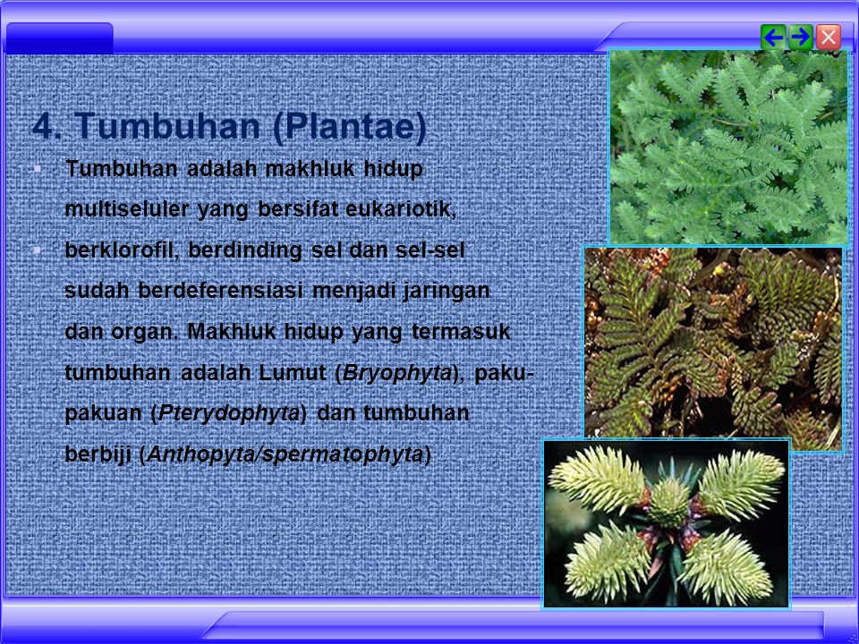 3. Jamur (Fungi/Mycota)  makhluk hidup unisel dan multiseluler,  tubuhnya tersusun atas benang hifa yang bersifat eukariotik,  tidak berkloroplas,