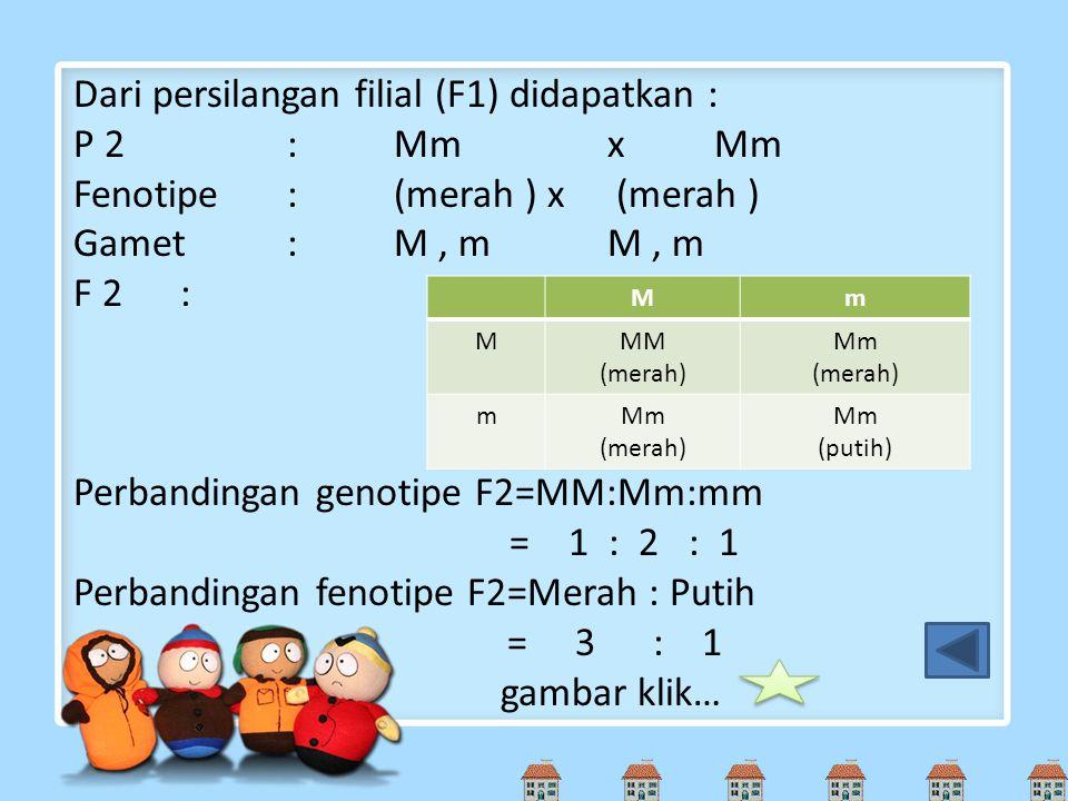 Dari persilangan filial (F1) didapatkan : P 2:MmxMm Fenotipe:(merah ) x (merah ) Gamet: M, mM, m F 2: Perbandingan genotipe F2=MM:Mm:mm = 1 : 2 : 1 Pe
