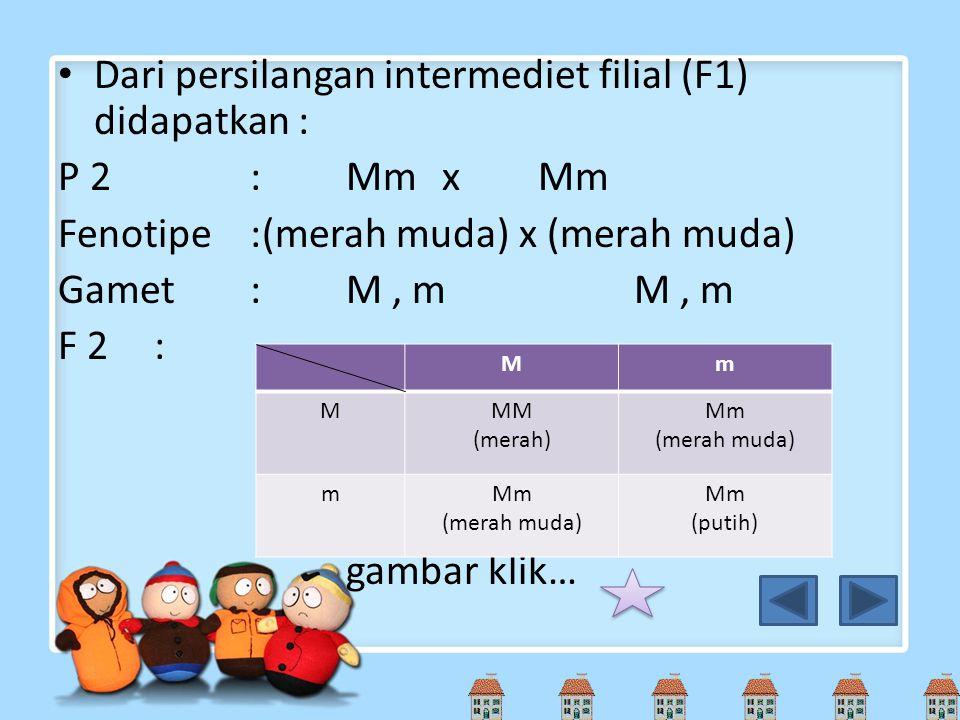 Dari persilangan intermediet filial (F1) didapatkan : P 2:MmxMm Fenotipe:(merah muda) x (merah muda) Gamet:M, mM, m F 2: gambar klik… Mm MMM (merah) M