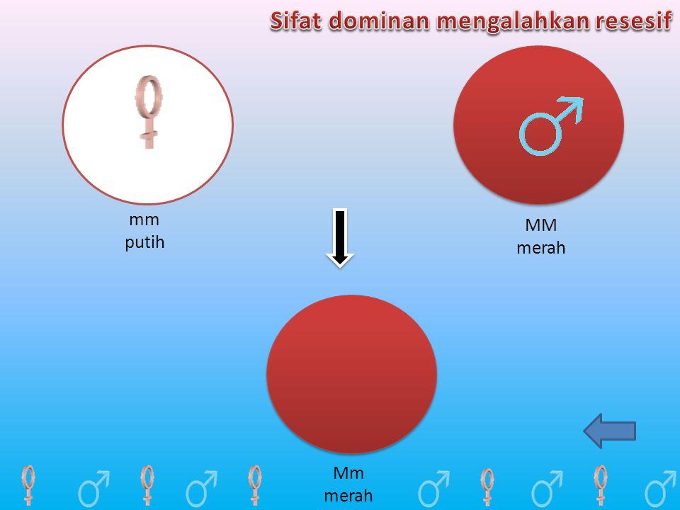 mm putih MM merah Mm merah