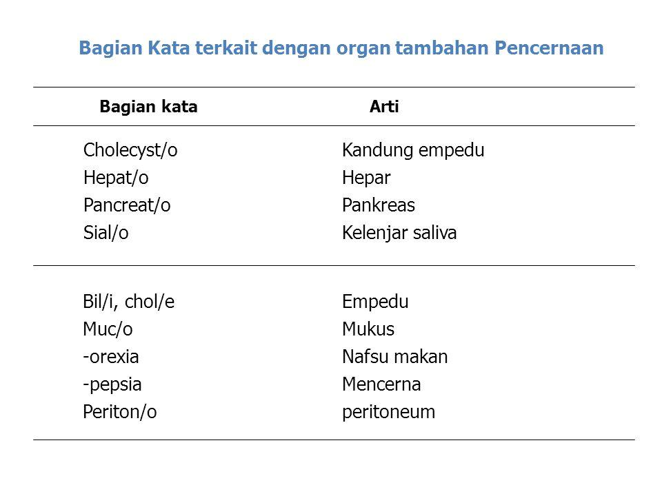 Bagian Kata terkait dengan organ tambahan Pencernaan Bagian kataArti Cholecyst/o Hepat/o Pancreat/o Sial/o Kandung empedu Hepar Pankreas Kelenjar saliva Bil/i, chol/e Muc/o -orexia -pepsia Periton/o Empedu Mukus Nafsu makan Mencerna peritoneum