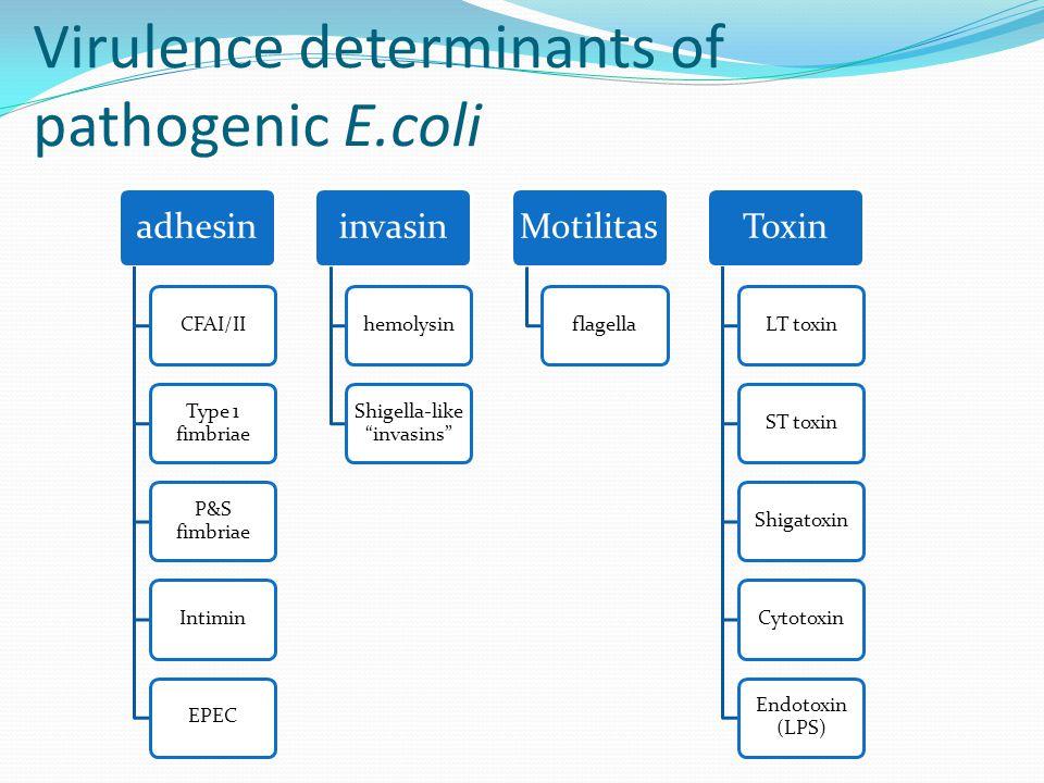 Enteroinvasive E.coli (EIEC) Dapat menempel pada sel kultur jaringan dengan aggregative manner Penyebab utama diare pada anak-anak Menghasilkan EAST(EnteroAggregative ST) toxin Menghasilkan hemolysin  berkaitan dengan infeksi saluran urin.