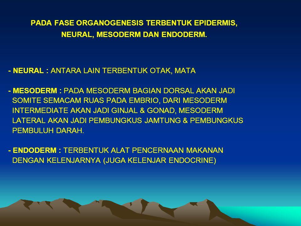 PADA SOMITE TERBENTUK : - SCHLEROTOME YANG JADI RANGKA AXIAL - MYOTOME JADI URAT DAGING DAN - DERMATOME JADI DERMIS DG DERIVATNYA LAMA MASA PENGERAMAN TERGANTUNG PADA : - SPESIES - FAKTOR LUAR ( SUHU, CAHAYA, GAS TERLARUT ) KELENJAR ENDODERMAL ( PHARINK )  ENZYM CHORIONASE ( PSEUDOKERATIN )  MEREDUKSI CHORION.