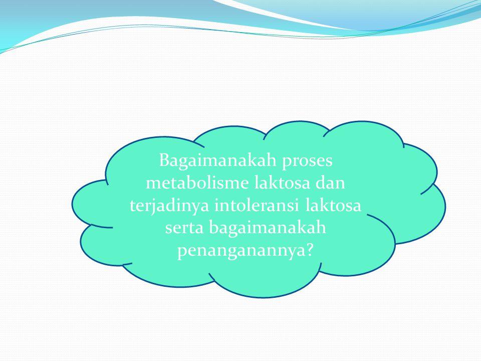 Bagaimanakah proses metabolisme laktosa dan terjadinya intoleransi laktosa serta bagaimanakah penanganannya?