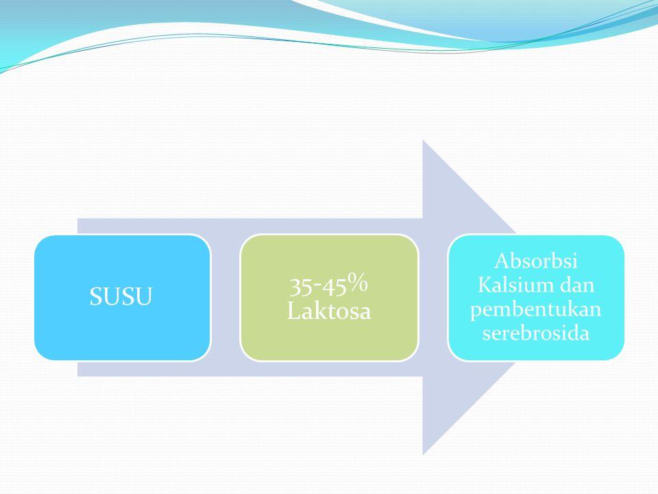 SUSU 35-45% Laktosa Absorbsi Kalsium dan pembentukan serebrosida