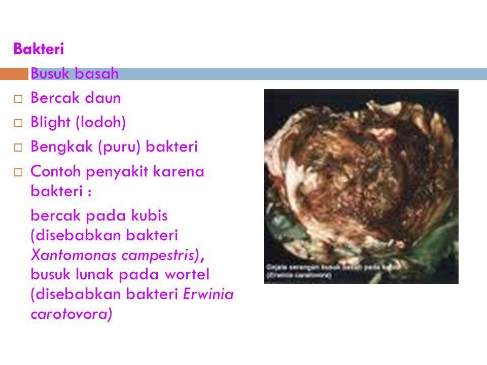 Bakteri  Busuk basah  Bercak daun  Blight (lodoh)  Bengkak (puru) bakteri  Contoh penyakit karena bakteri : bercak pada kubis (disebabkan bakteri