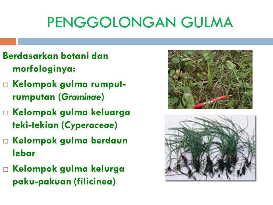 PENGGOLONGAN GULMA Berdasarkan botani dan morfologinya:  Kelompok gulma rumput- rumputan (Graminae)  Kelompok gulma keluarga teki-tekian (Cyperaceae