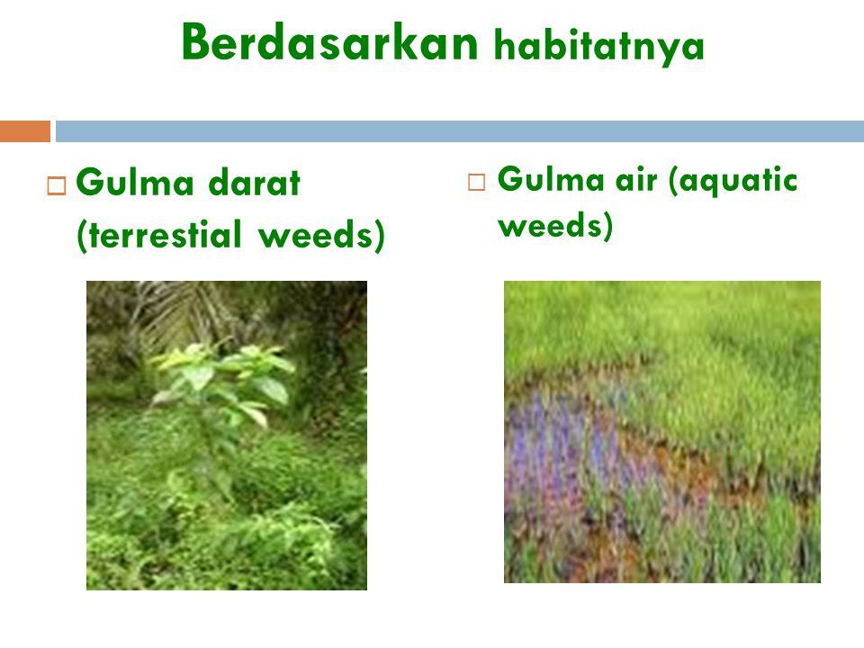 Berdasarkan habitatnya  Gulma darat (terrestial weeds)  Gulma air (aquatic weeds)