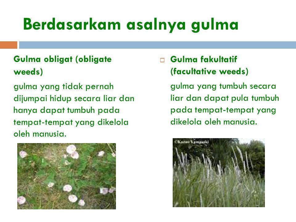 Berdasarkam asalnya gulma Gulma obligat (obligate weeds) gulma yang tidak pernah dijumpai hidup secara liar dan hanya dapat tumbuh pada tempat-tempat
