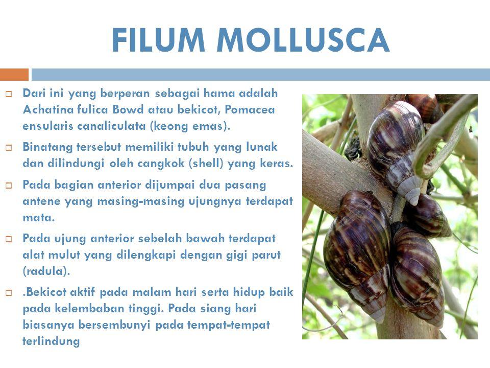 FILUM MOLLUSCA  Dari ini yang berperan sebagai hama adalah Achatina fulica Bowd atau bekicot, Pomacea ensularis canaliculata (keong emas).  Binatang