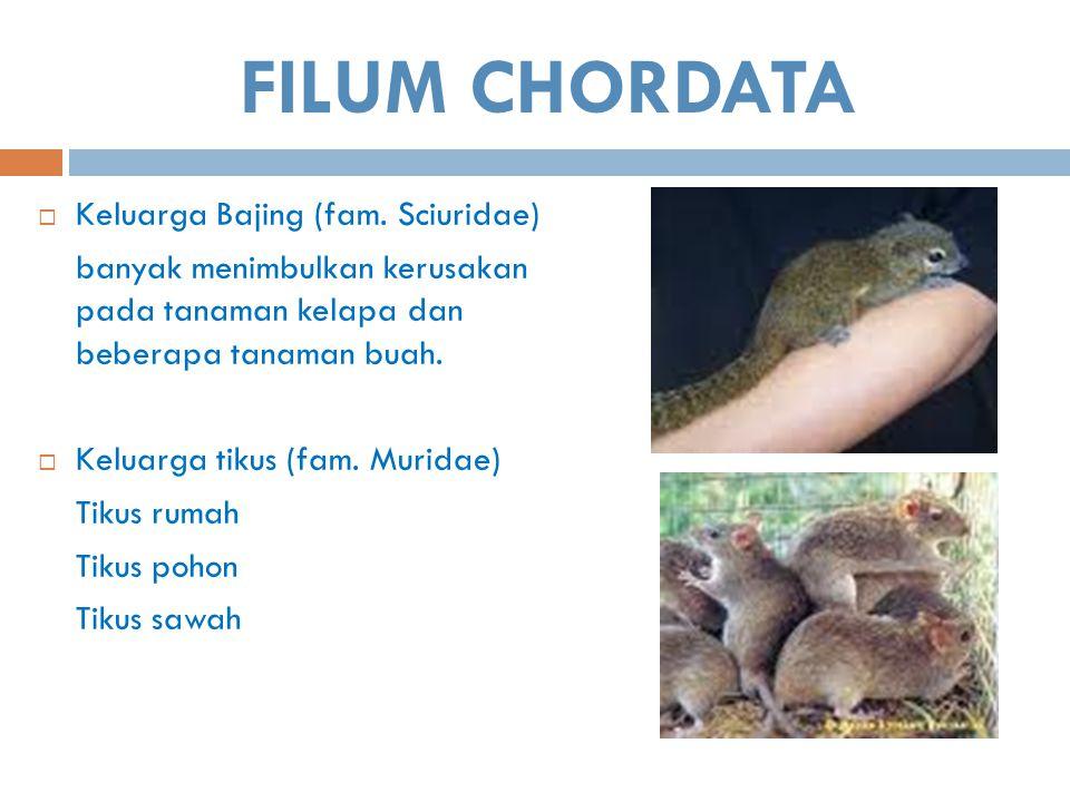 FILUM CHORDATA  Keluarga Bajing (fam. Sciuridae) banyak menimbulkan kerusakan pada tanaman kelapa dan beberapa tanaman buah.  Keluarga tikus (fam. M