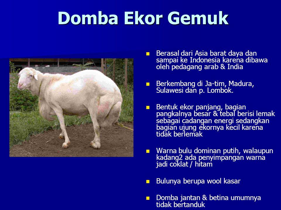 Domba Ekor Gemuk Berasal dari Asia barat daya dan sampai ke Indonesia karena dibawa oleh pedagang arab & India Berkembang di Ja-tim, Madura, Sulawesi dan p.