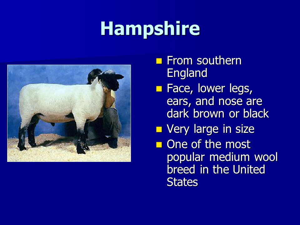 Hampshire From southern England From southern England Face, lower legs, ears, and nose are dark brown or black Face, lower legs, ears, and nose are da
