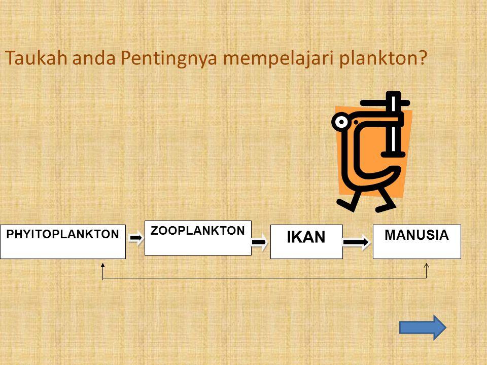 Taukah anda Pentingnya mempelajari plankton? PHYITOPLANKTON ZOOPLANKTON IKAN MANUSIA