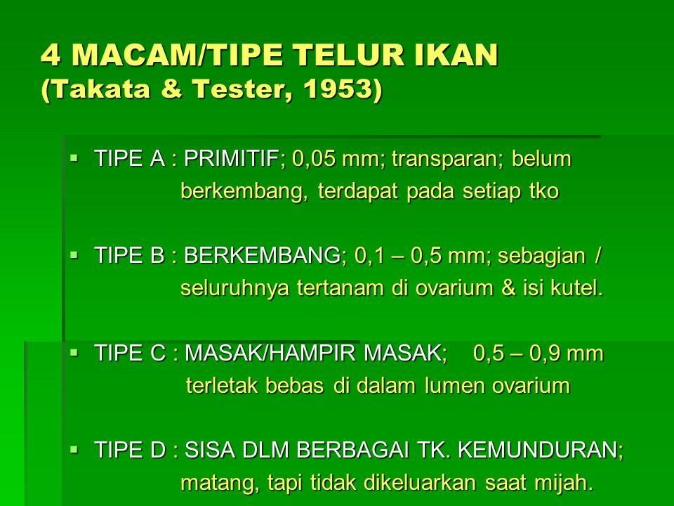 4 MACAM/TIPE TELUR IKAN (Takata & Tester, 1953)  TIPE A : PRIMITIF; 0,05 mm; transparan; belum berkembang, terdapat pada setiap tko berkembang, terda