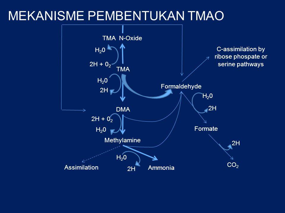 Reduksi TMAO Jenis enzim  reduksi TMAO menjadi TMA  DMA  FA Enzim endogen pada ikan Enzim eksogen dihasilkan bakteri Aktivitas enzim berperan dalam pembusukan ikan