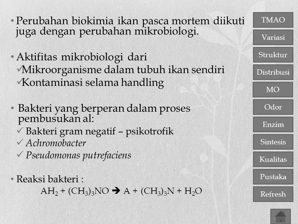 TMAO Variasi Distribusi Struktur MO Odor Enzim Sintesis Kualitas Pustaka Refresh Perubahan biokimia ikan pasca mortem diikuti juga dengan perubahan mi