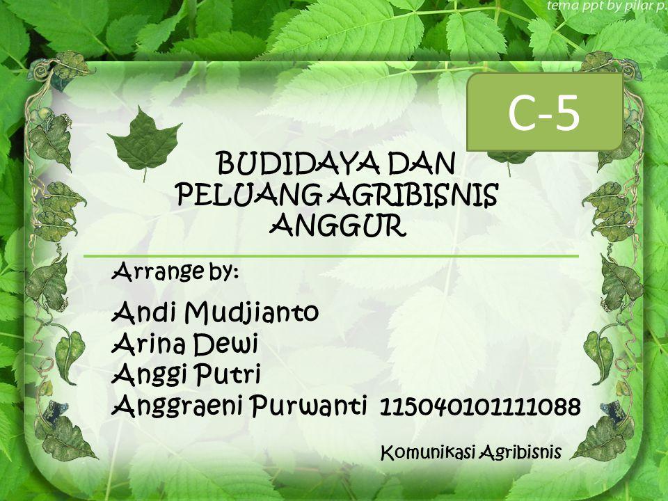BUDIDAYA DAN PELUANG AGRIBISNIS ANGGUR Arrange by: Andi Mudjianto Arina Dewi Anggi Putri Anggraeni Purwanti115040101111088 Komunikasi Agribisnis C-5