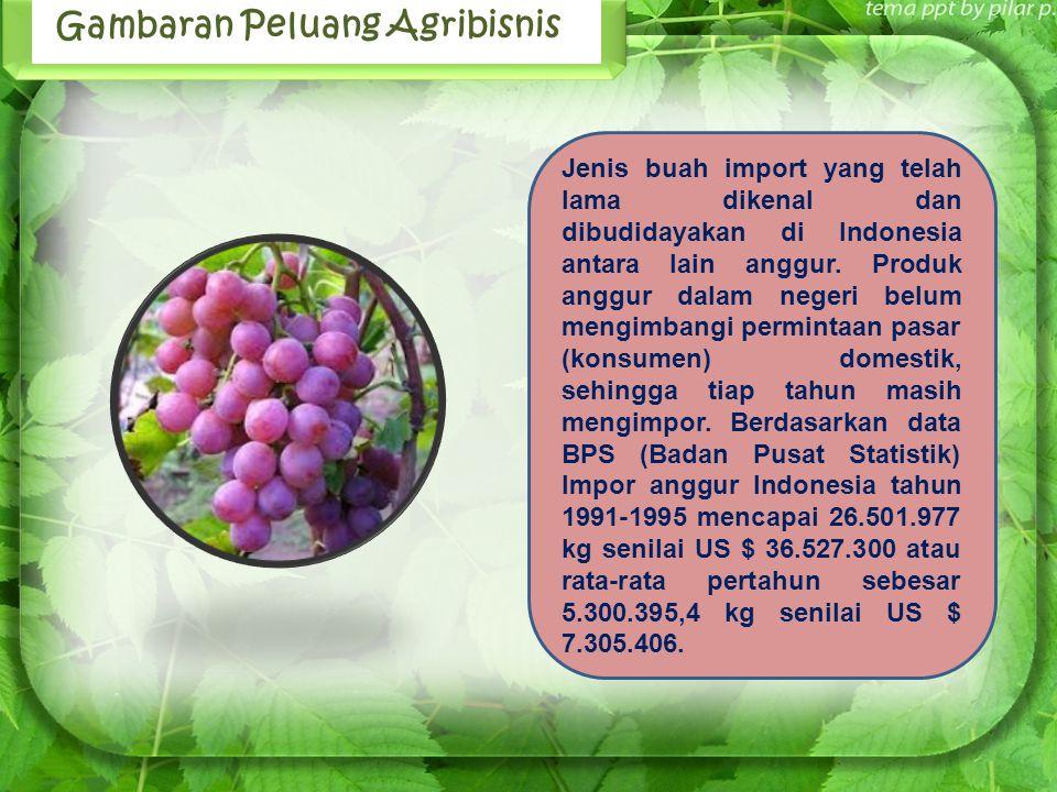 Jenis buah import yang telah lama dikenal dan dibudidayakan di Indonesia antara lain anggur. Produk anggur dalam negeri belum mengimbangi permintaan p