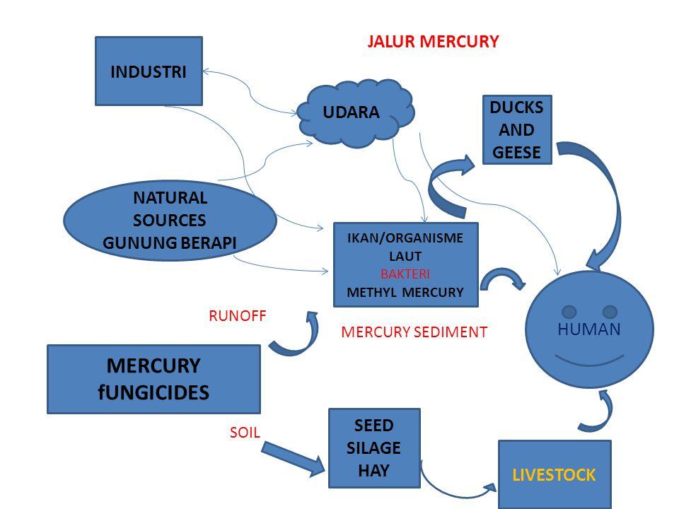INDUSTRI NATURAL SOURCES GUNUNG BERAPI MERCURY fUNGICIDES IKAN/ORGANISME LAUT BAKTERI METHYL MERCURY HUMAN LIVESTOCK SEED SILAGE HAY DUCKS AND GEESE UDARA JALUR MERCURY MERCURY SEDIMENT SOIL RUNOFF