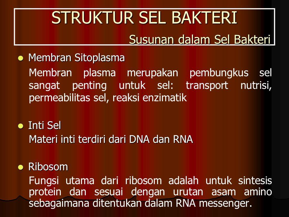 STRUKTUR SEL BAKTERI Susunan dalam Sel Bakteri Membran Sitoplasma Membran Sitoplasma Membran plasma merupakan pembungkus sel sangat penting untuk sel: