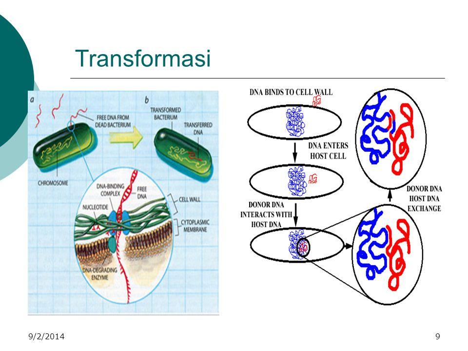 Reproduksi  Bakteri berkembang biak dengan cara : Generatif dengan rekombinasi genetik  pemindahan secara langsung bahan genetik (DNA) di antara dua sel bakteri melalui proses berikut: 1.