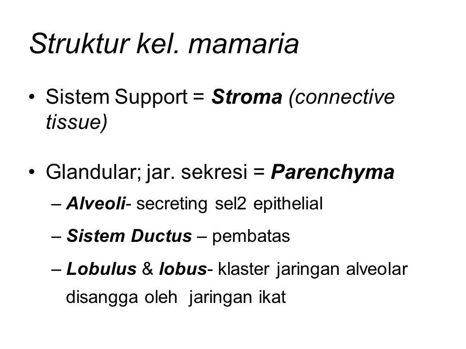 Struktur kel. mamaria Sistem Support = Stroma (connective tissue) Glandular; jar. sekresi = Parenchyma –Alveoli- secreting sel2 epithelial –Sistem Duc