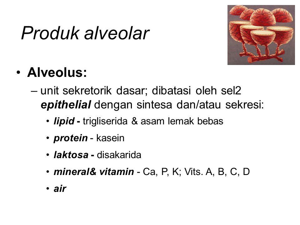 Produk alveolar Alveolus: –unit sekretorik dasar; dibatasi oleh sel2 epithelial dengan sintesa dan/atau sekresi: lipid - trigliserida & asam lemak beb