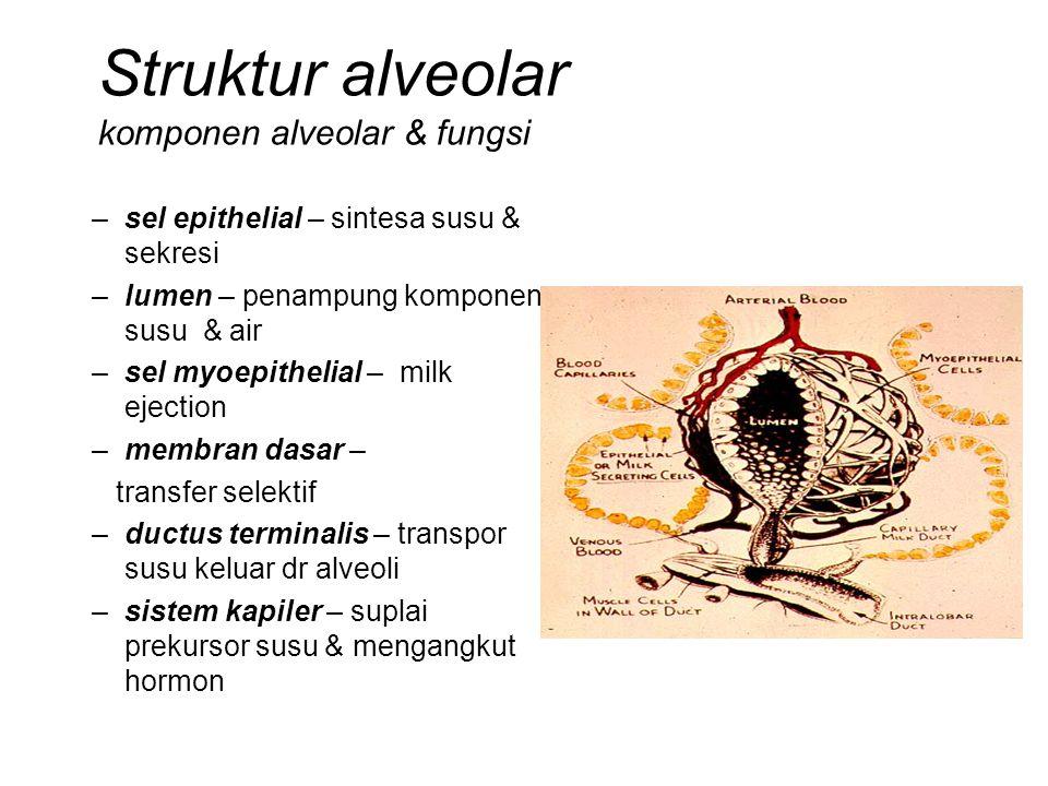 Struktur alveolar komponen alveolar & fungsi –sel epithelial – sintesa susu & sekresi –lumen – penampung komponen susu & air –sel myoepithelial – milk