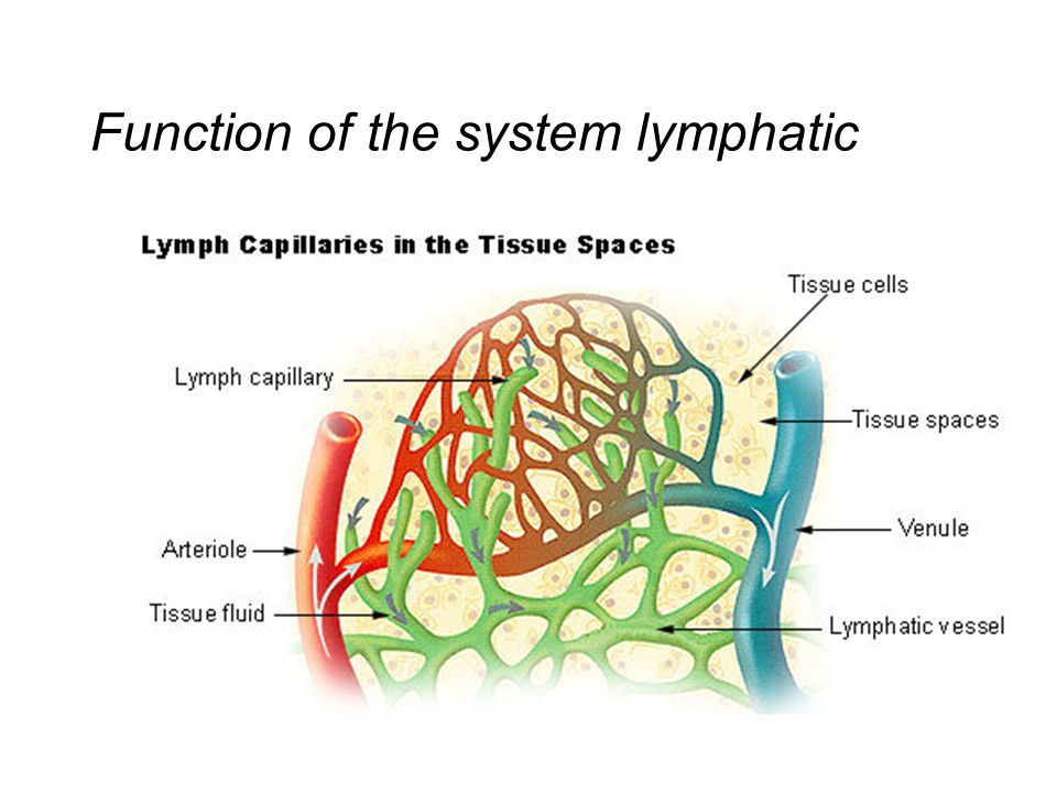 Function of the system lymphatic