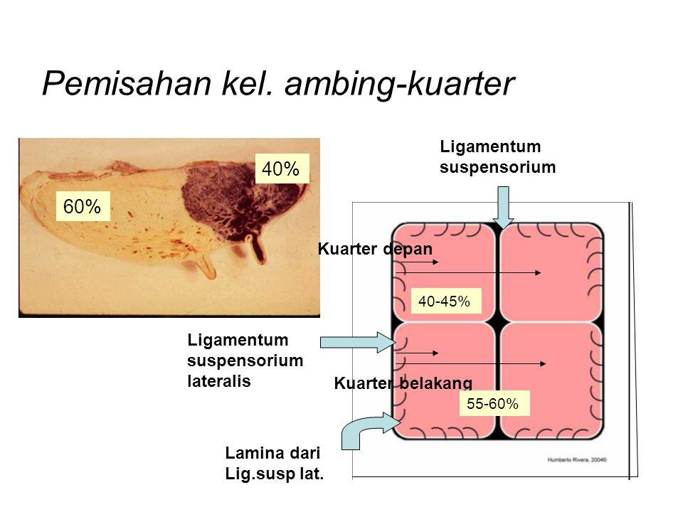 Pemisahan kel. ambing-kuarter 60% Ligamentum suspensorium Ligamentum suspensorium lateralis Kuarter depan 40% Kuarter belakang Lamina dari Lig.susp la