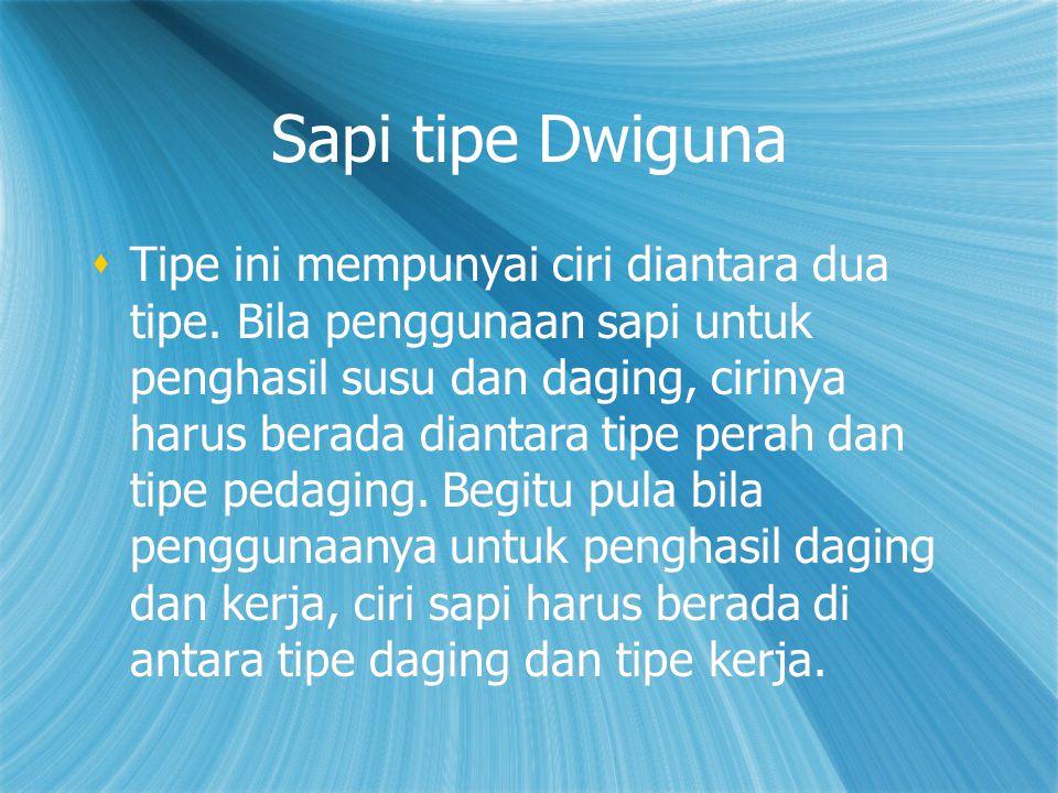 Sapi tipe Dwiguna  Tipe ini mempunyai ciri diantara dua tipe. Bila penggunaan sapi untuk penghasil susu dan daging, cirinya harus berada diantara tip