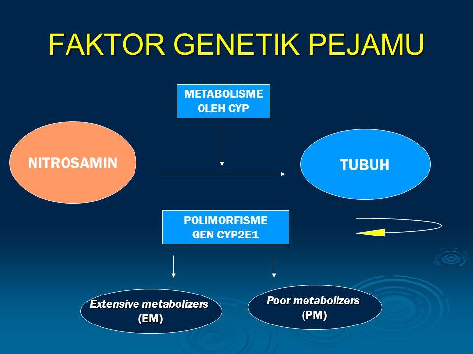 FAKTOR GENETIK PEJAMU NITROSAMIN TUBUH METABOLISME OLEH CYP POLIMORFISME GEN CYP2E1 Extensive metabolizers (EM) Poor metabolizers (PM)