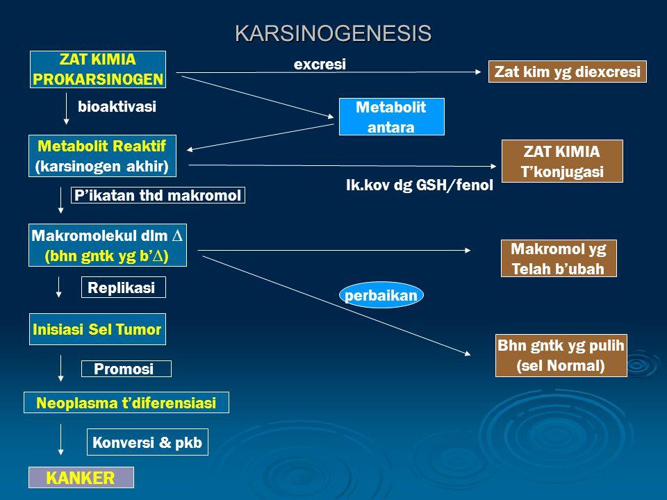 KARSINOGENESIS ZAT KIMIA PROKARSINOGEN ZAT KIMIA T'konjugasi Metabolit Reaktif (karsinogen akhir) Bhn gntk yg pulih (sel Normal) Makromol yg Telah b'ubah Metabolit antara Zat kim yg diexcresi Makromolekul dlm ∆ (bhn gntk yg b'∆) Inisiasi Sel Tumor Neoplasma t'diferensiasi KANKER P'ikatan thd makromol Replikasi Promosi Konversi & pkb perbaikan Ik.kov dg GSH/fenol excresi bioaktivasi
