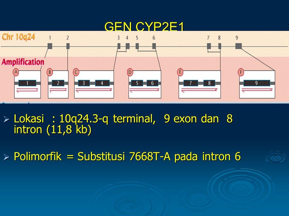 GEN CYP2E1  Lokasi : 10q24.3-q terminal, 9 exon dan 8 intron (11,8 kb)  Polimorfik = Substitusi 7668T-A pada intron 6