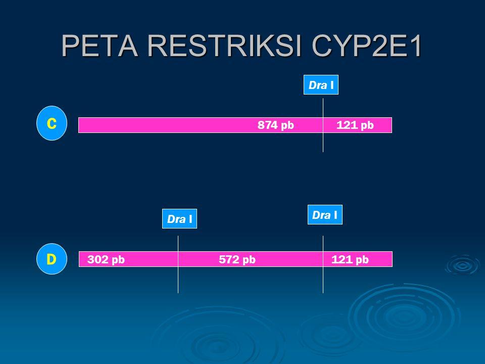 PETA RESTRIKSI CYP2E1 874 pb 121 pb 302 pb 572 pb 121 pb C D Dra I