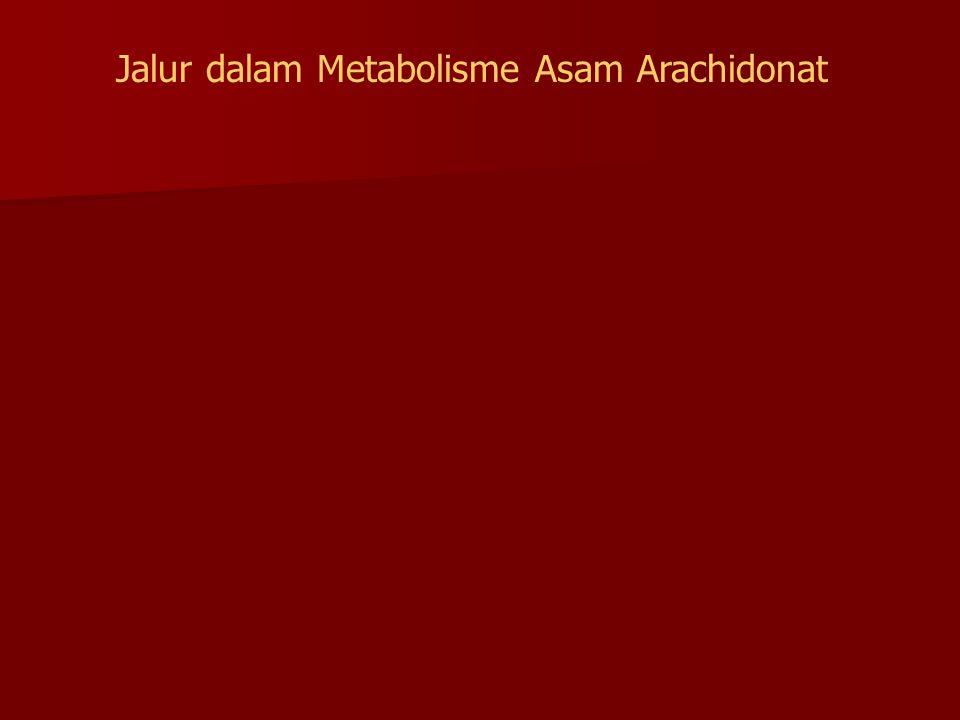 Jalur dalam Metabolisme Asam Arachidonat