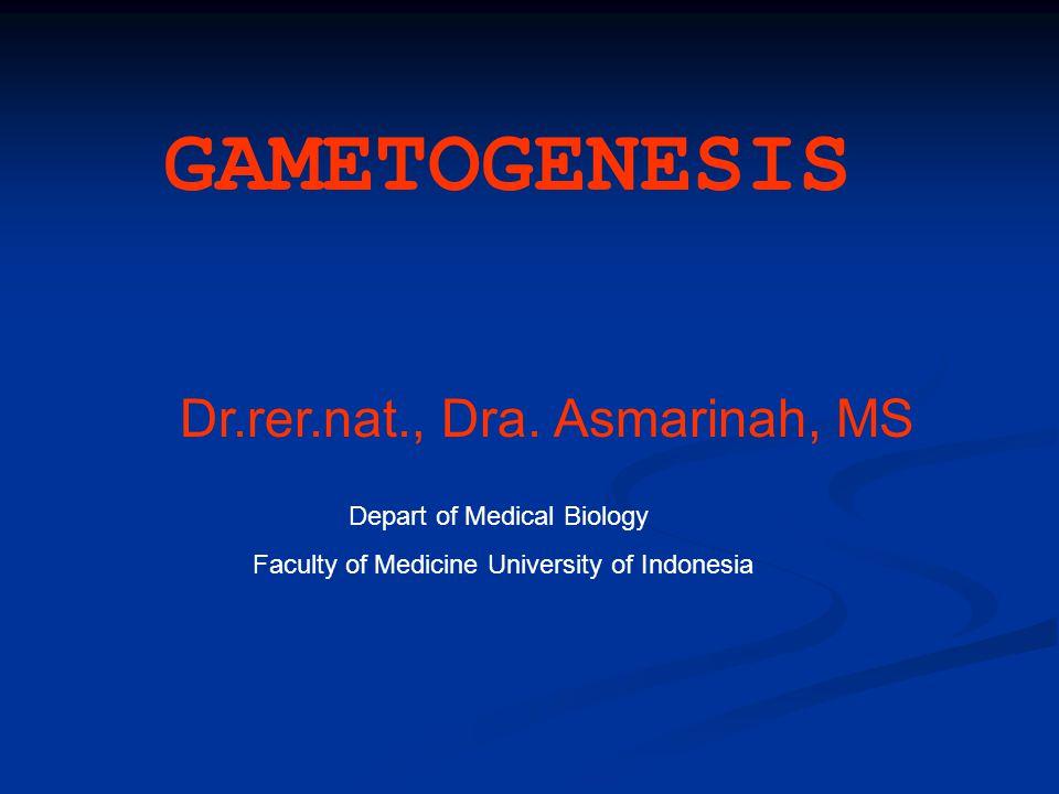 Gametogenesis: proses pembentukan gamet (sel yang haploid, yaitu sperma dan ovum) melalui pembelahan meiosis; Spermatogenesis Oogenesis